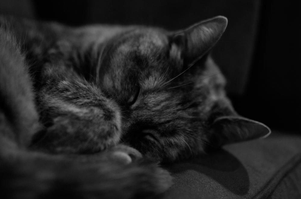 SleepingBeauty
