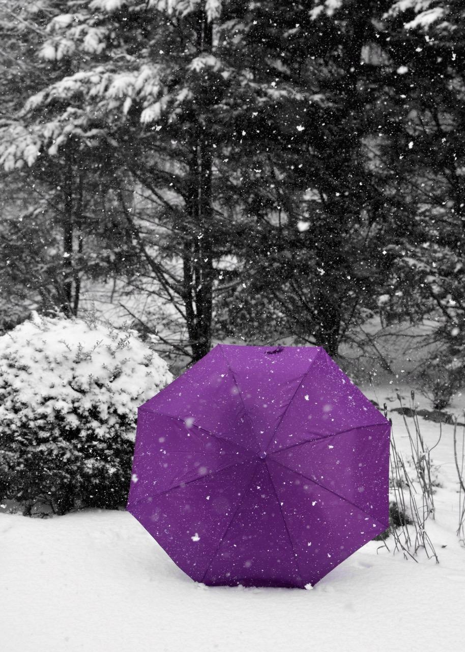 Crocus In Snowfall